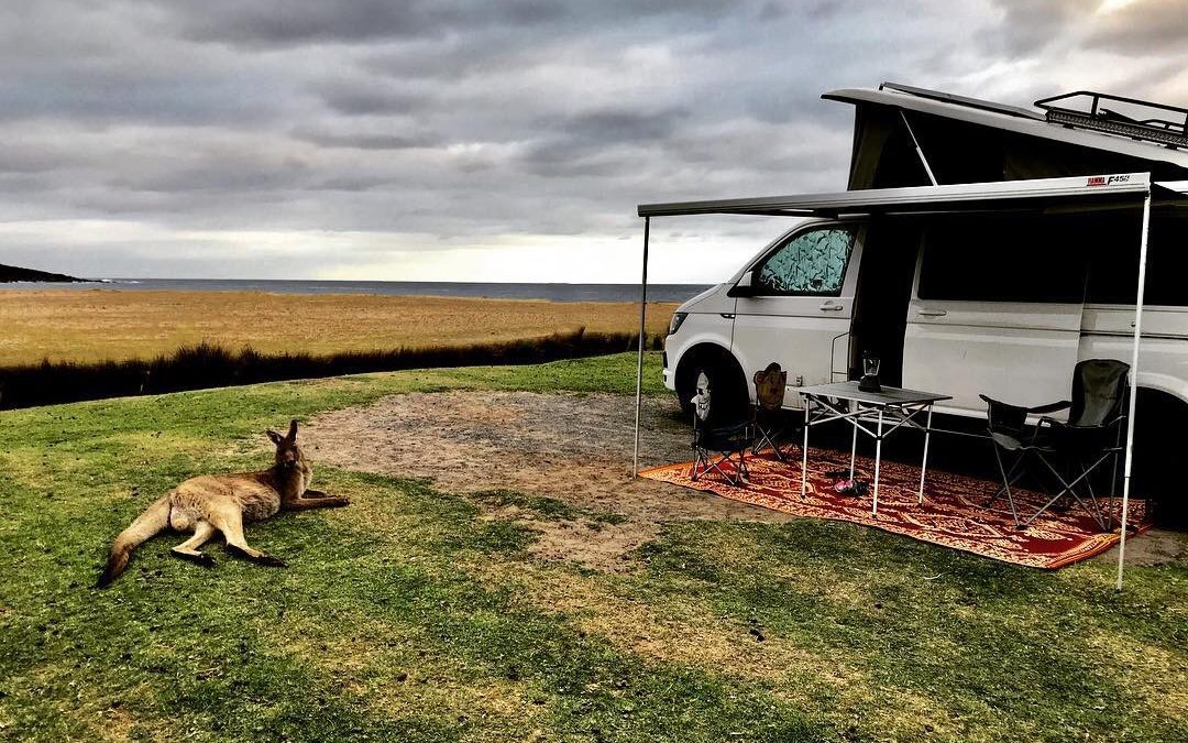 A giant roo, sideways rain and a leaky coffee cup